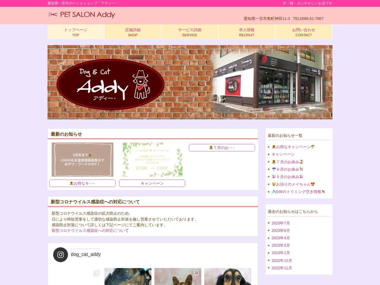 Dog&Catアディー(Addy)