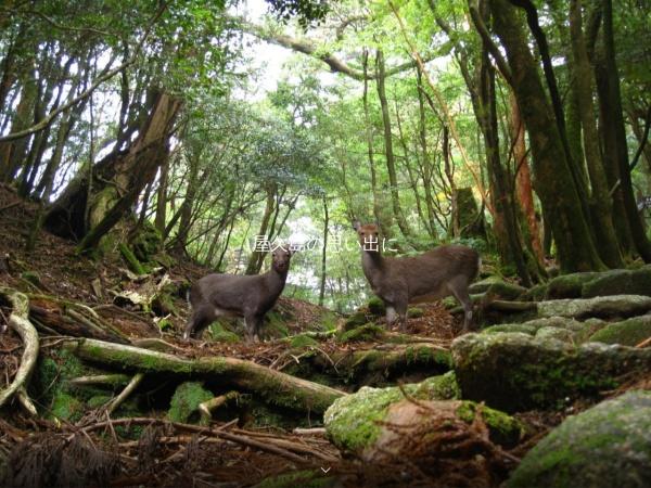 Screenshot of aquastyle-yakushima.com