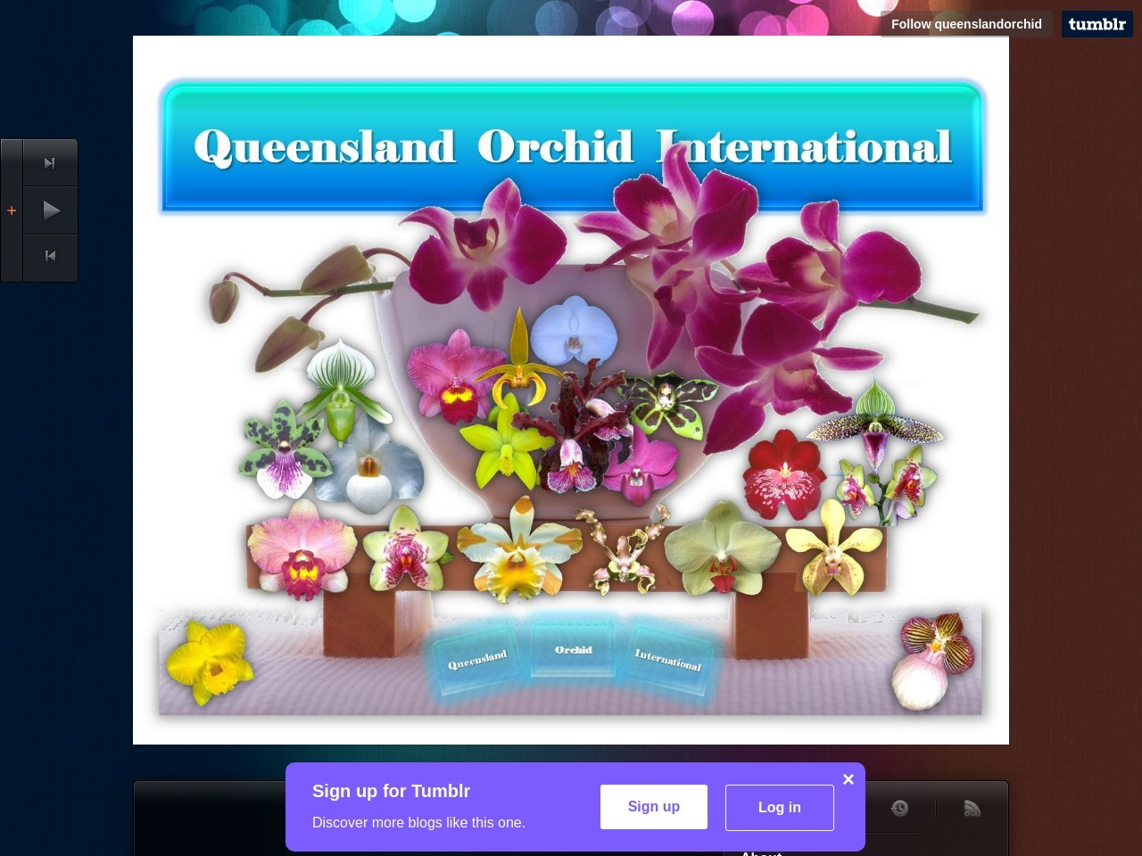 Queensland Orchid International on Tumblr