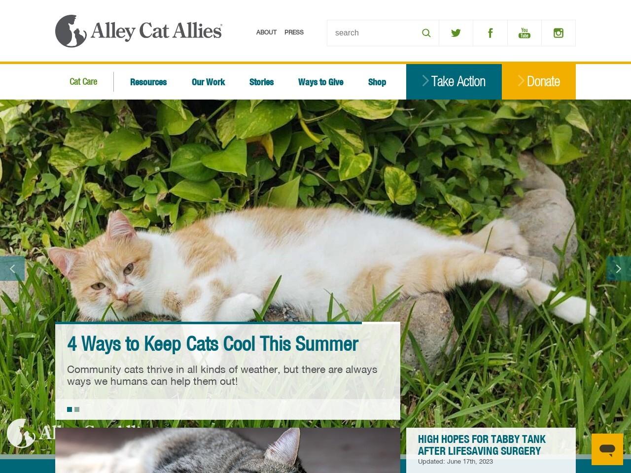 alleycat.org