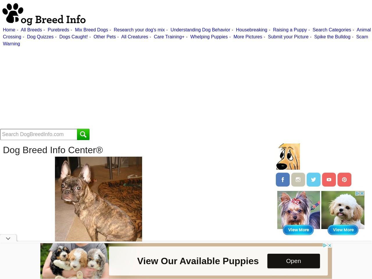 dogbreedinfo.com