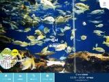 新札幌「サンピアザ水族館」