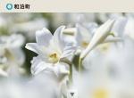 Screenshot of www.town.wadomari.lg.jp