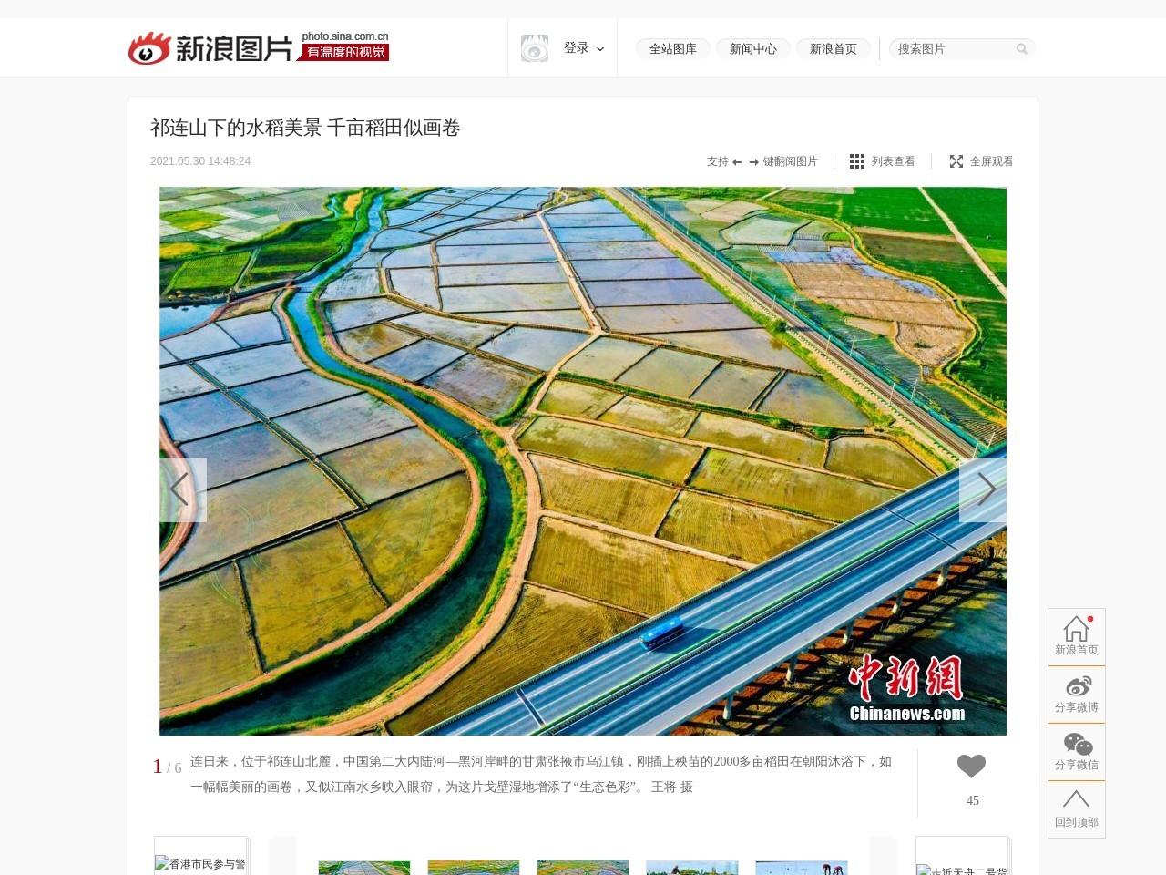 祁连山下的水稻美景 千亩稻田似画卷_高清图集_新浪网