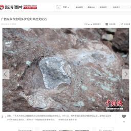 广西东兴市发现侏罗纪时期恐龙化石_高清图集_新浪网
