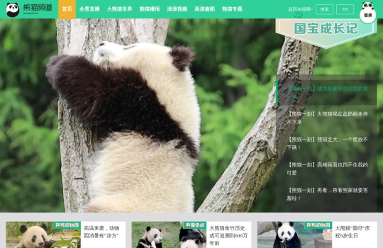 熊猫频道_熊猫频道官网