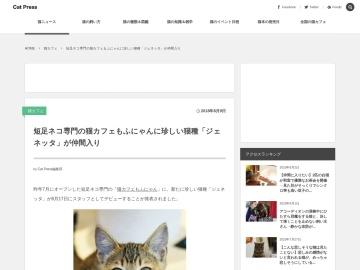 短足ネコ専門の猫カフェもふにゃんに珍しい猫種「ジェネッタ」が仲間入り