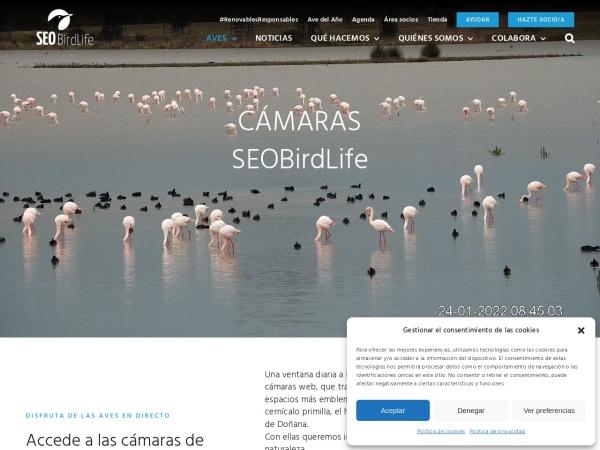 Captura de pantalla de seo.org