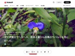 https://yamap.co.jp/activity/988841