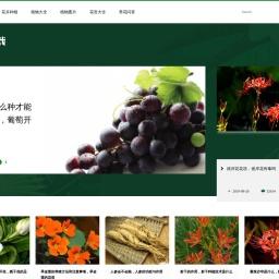 四季盆栽 - 一家专业的盆栽植物栽培网站!
