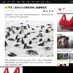 罕见!南非63只企鹅在海滩上被蜜蜂蛰死_濒危