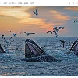 座头鲸掠食季节  | 必应壁纸|必应美图
